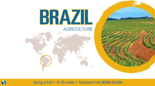 Brazil Agriculture